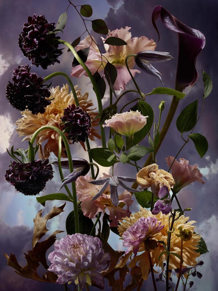 November flowers-Mauve_MKarrer_60x80.jpg