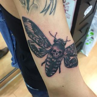 death head moth a.JPG