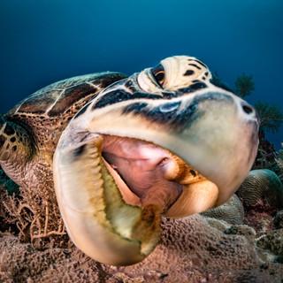 Turtle Ledge