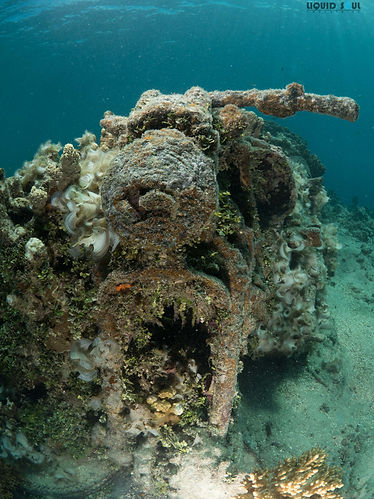 Diving The Harley Reef in Guam