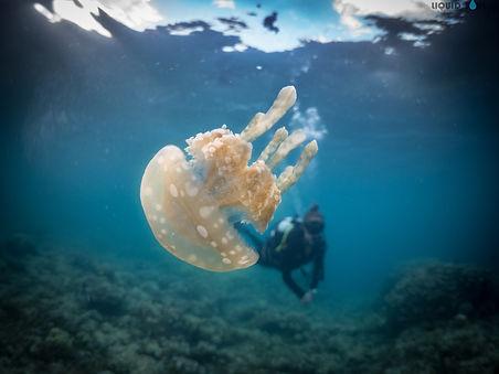 Diving San Luis Beach in Guam