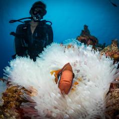 Double Reef