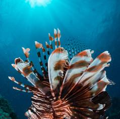 Petes Reef