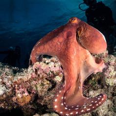 Veckies Reef