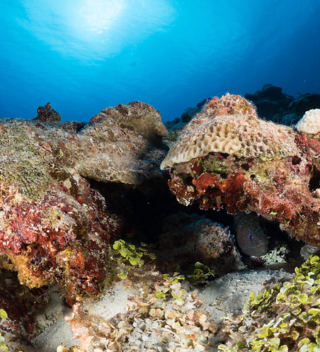 Diving Double Reef in Guam