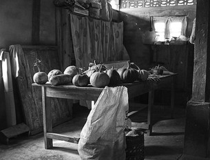 Harvest at the Orphanage