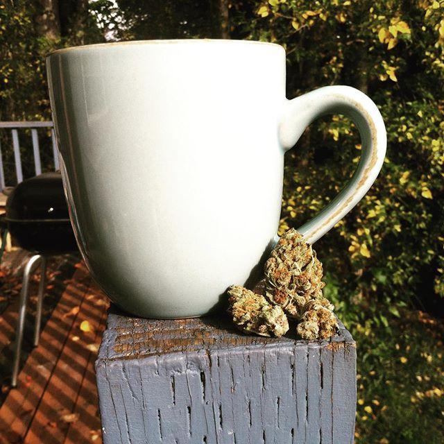 #coffee and #sativa #omgsykes #lemonskunk #wakenbake #pnw #502rec #washington #sunny #buds #weed #42