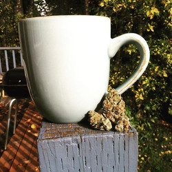 #coffee and #sativa #omgsykes #lemonskunk #wakenbake #pnw #502rec #washington #sunny #buds #weed #42