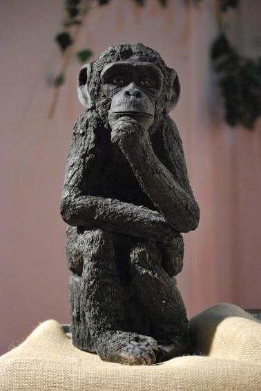 Le penseur, chimpanzé