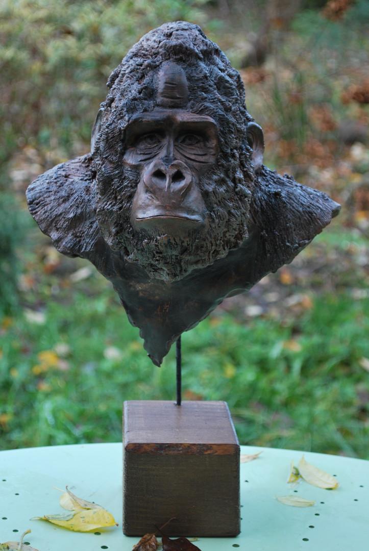 Le portrait du gorille