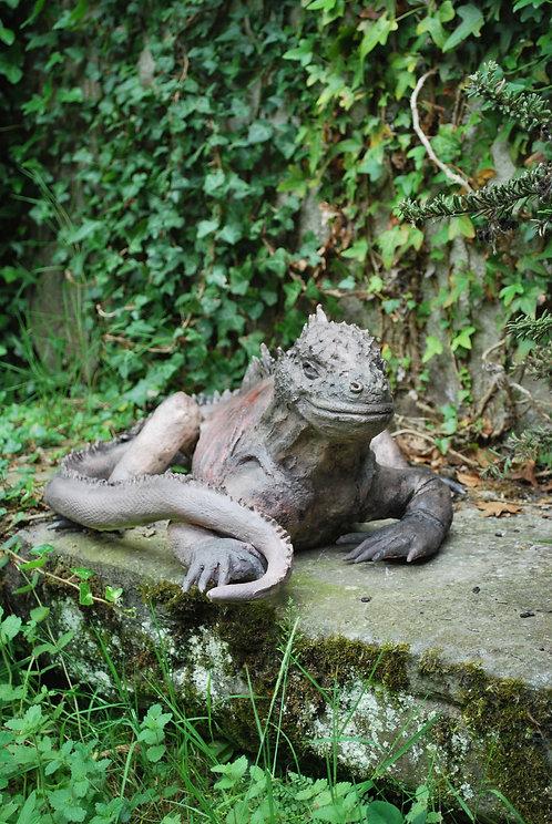 Iguane Galapagos