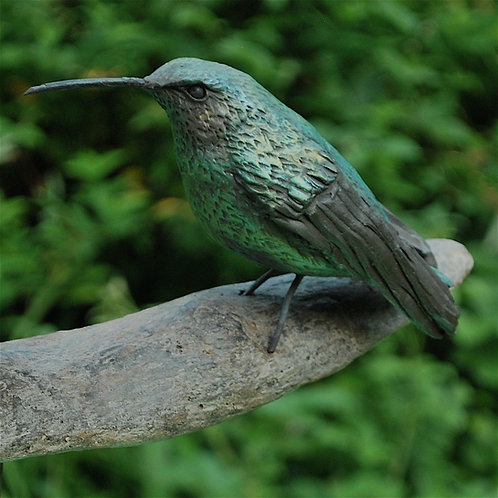 Colibri branche