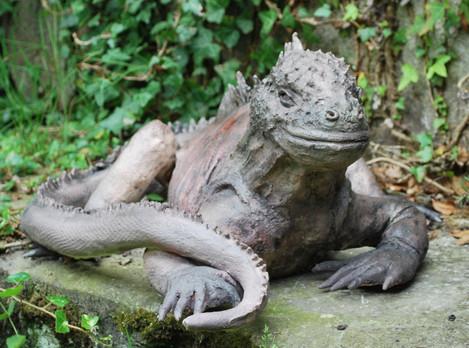Iguane des Galapagos