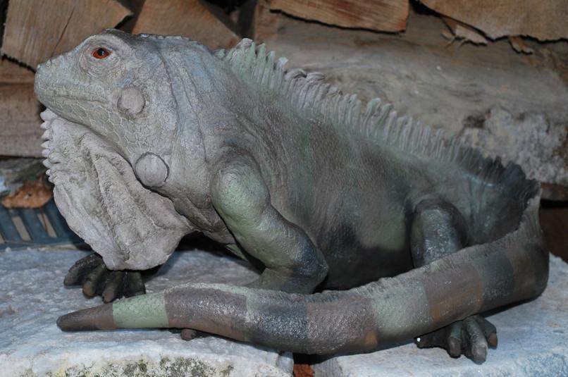 Iguane verte