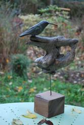 Autre colibri
