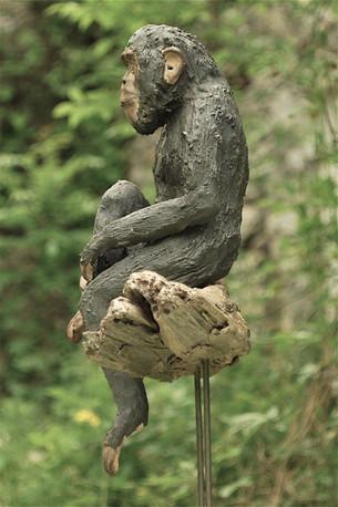 Chimpanzé sur sa branche