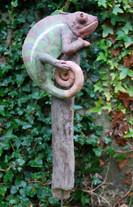 Caméléon sur sa branche