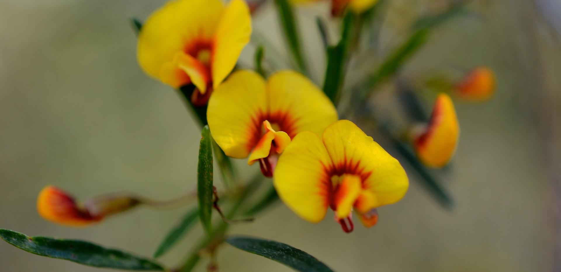 Native flowers.jpg