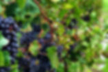 flx_wine.jpg