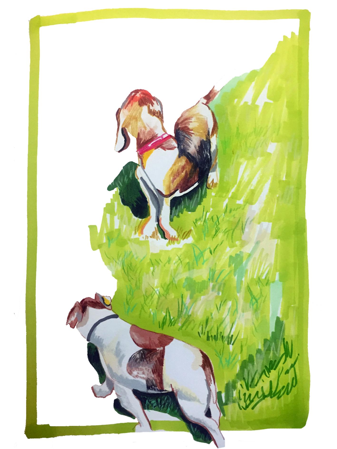 Hackney Dogs