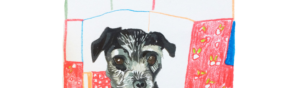 Sadie the Dog