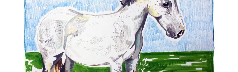 Paddie the Horse