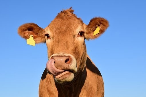 Save the cows; Drink plant milk!  Photo by: Ulleo from Searchbay.pixabay.com