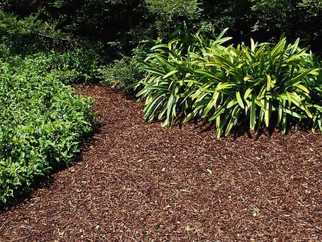 Keep Weeds Out of Your Mulch Beds