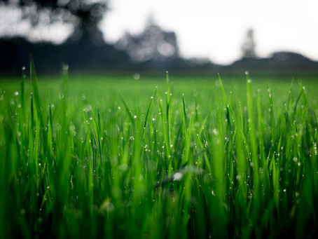 What is a Transition Zone and How Does It Affect My Lawn