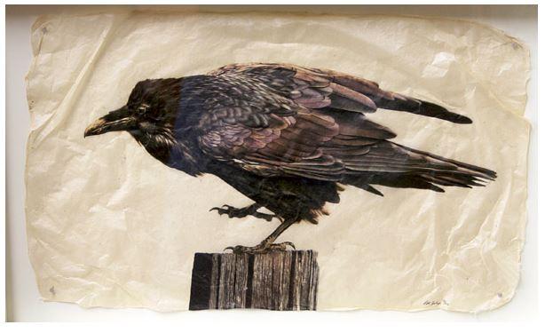 Raven Dance