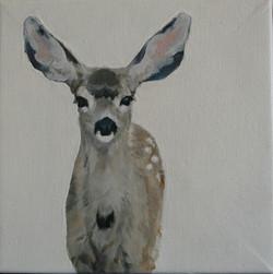 Mule Deer II