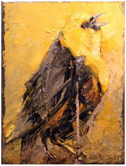 Yellow Headed Blackbird Calling