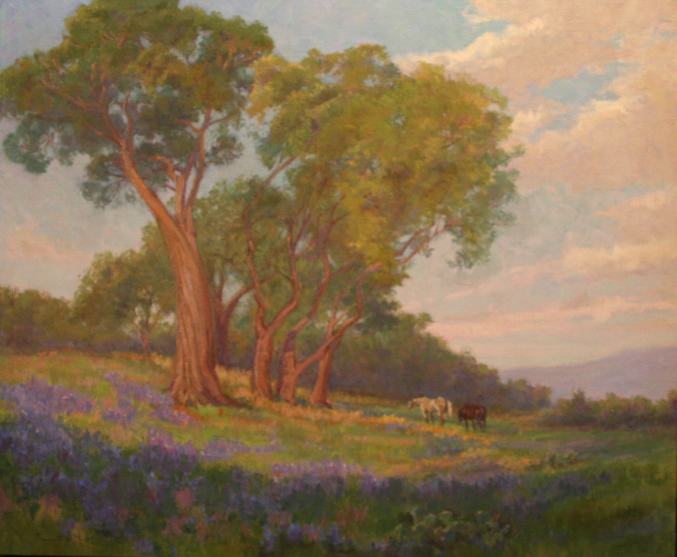 """Cedar with Bluebonnets"""