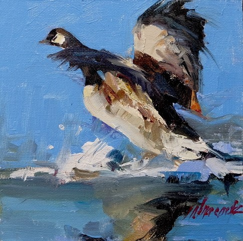 Canadian Goose Study        NEW WORK