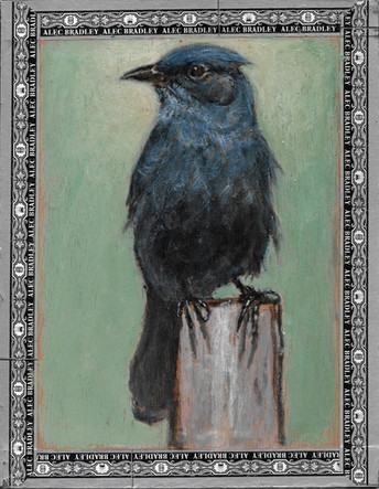 Mountain Bluebird / Alec Bradley