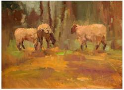 Foggy Day Sheep