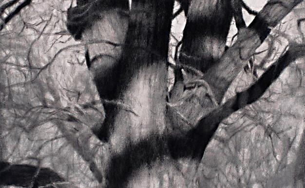 Alice Wood's Shadow