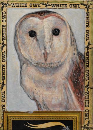 Barn Owl /white Owl