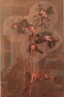 Five Poppies
