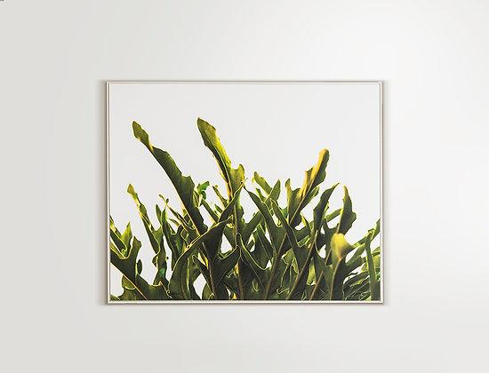Verde 1- 150x120cm