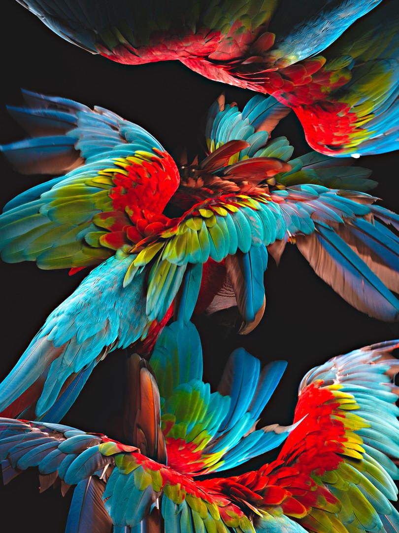 JW190711, Feather Dance.jpg