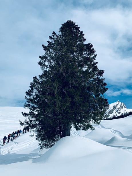 Schneeschuhgruppe beim Tannenbaum