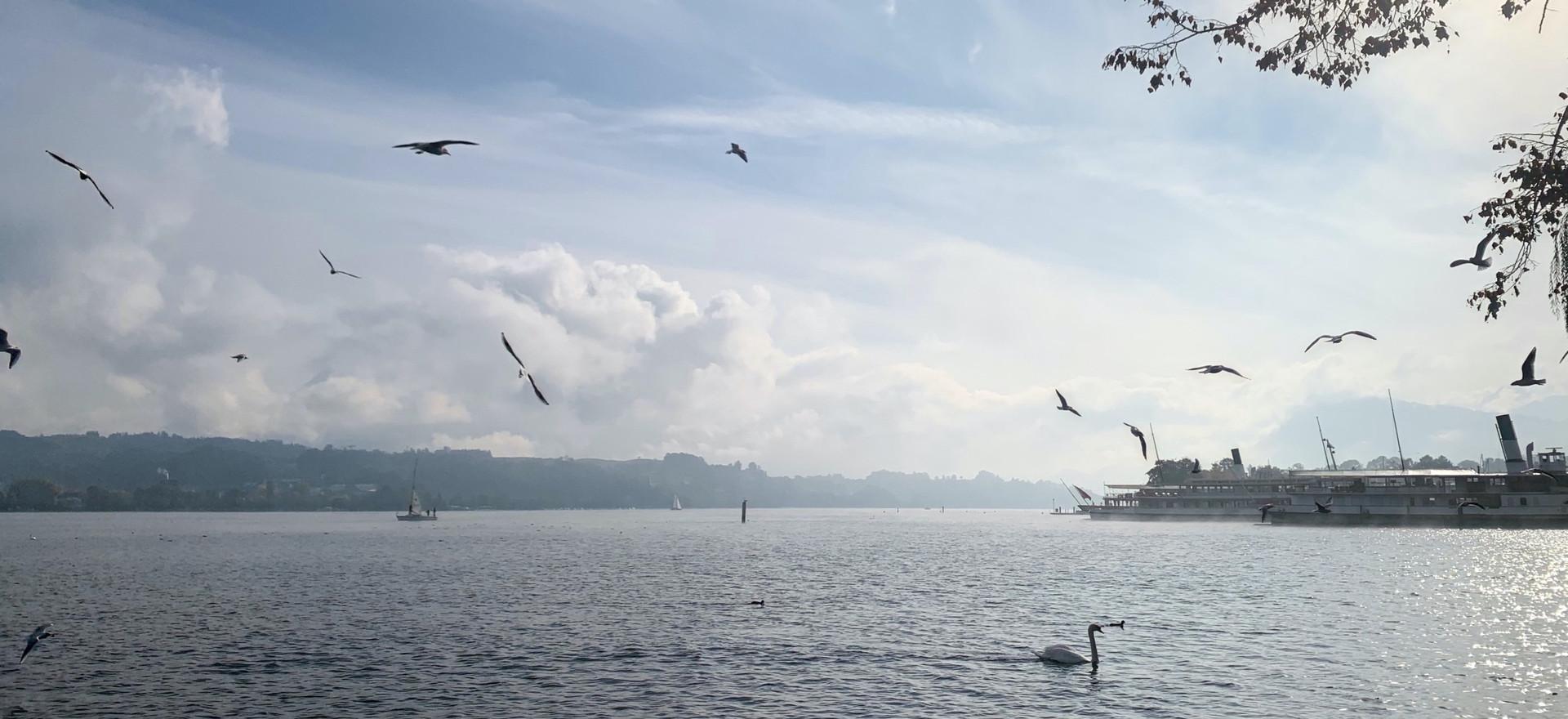 Outdooryoga vom Inseliquai zur Allmend Luzern