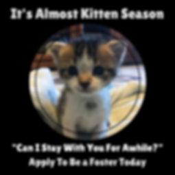 It's Almost Kitten Season.jpg