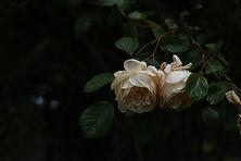 plantsa-57.jpg
