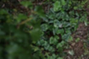 plantsa-36.jpg