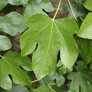 plantsa-60.jpg