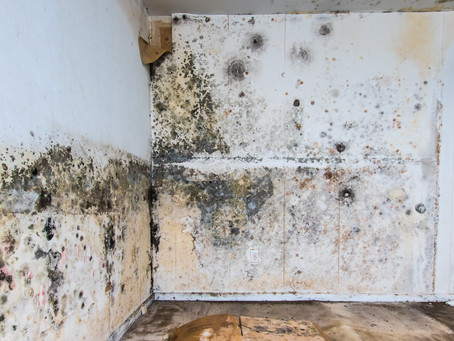 What makes toxic mold grow?