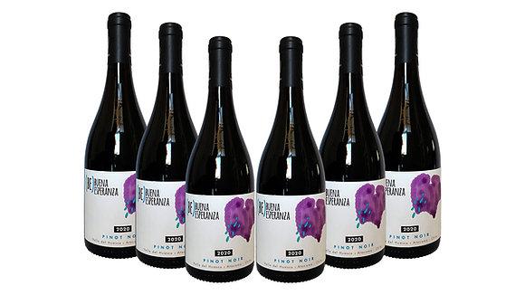 Pack de 6 Pinot Noir - Buena Esperanza 2020