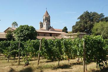 vignes-abbaye-lerins-vignes.jpg